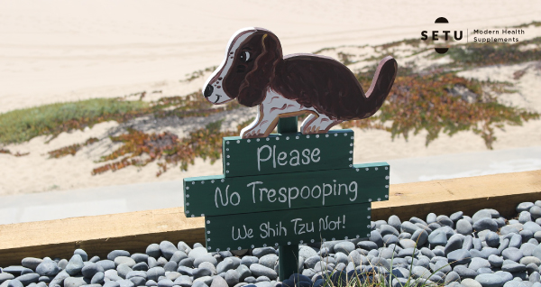 My dog is pooping everywhere – Does he need probiotics?
