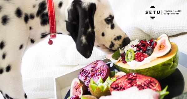 Your dog needs probiotics too